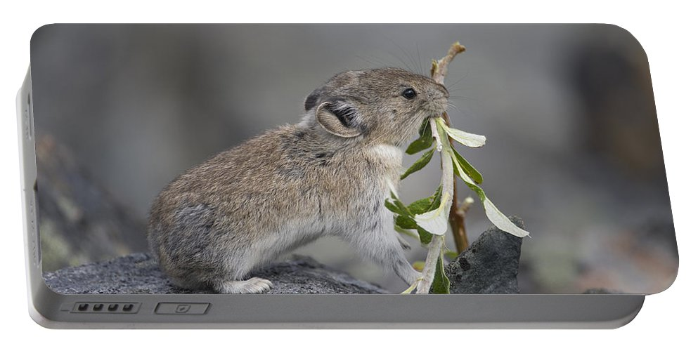 Mp Portable Battery Charger featuring the photograph American Pika by Michael Quinton