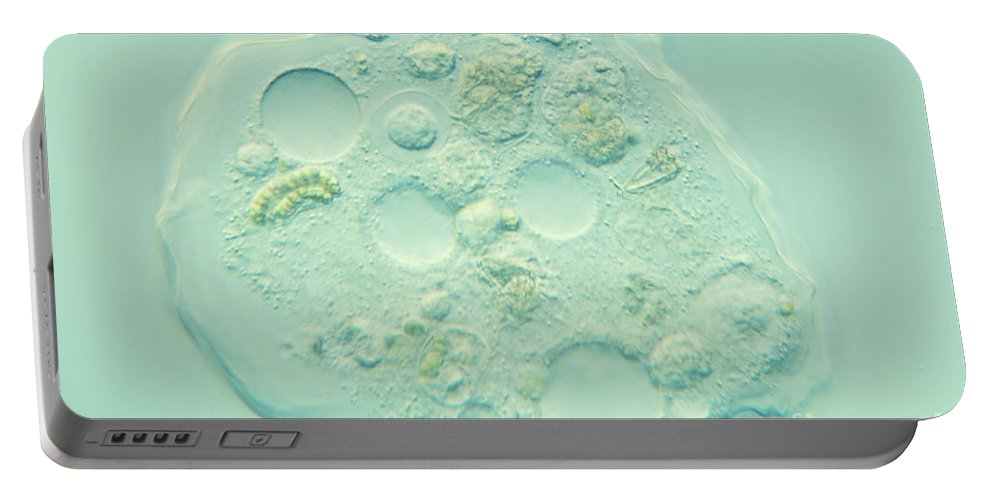 Nomarski Microscopy Portable Battery Charger featuring the photograph Amoeba Verrucosa by M. I. Walker