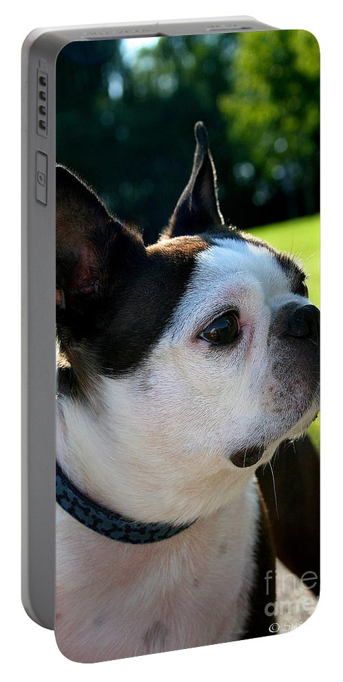 Mammal Portable Battery Charger featuring the photograph An American Gentleman by Susan Herber