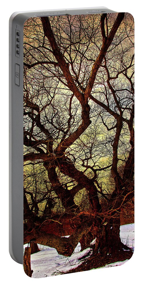 Winter Portable Battery Charger featuring the photograph Ancient Winter Tree by Chris Lord