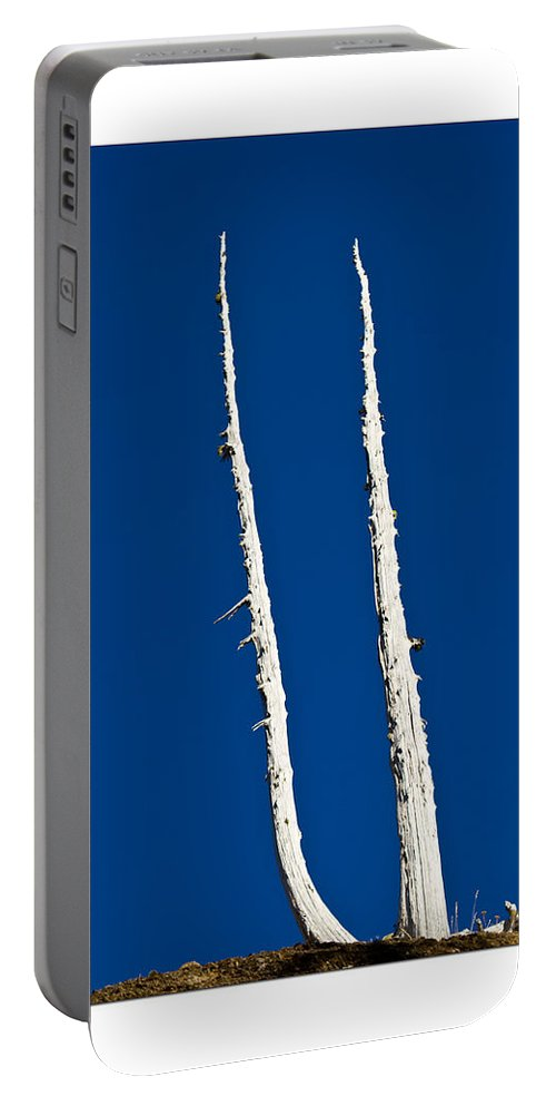 Ancient Trees Portable Battery Charger featuring the photograph Ancients Stand by Marie Jamieson