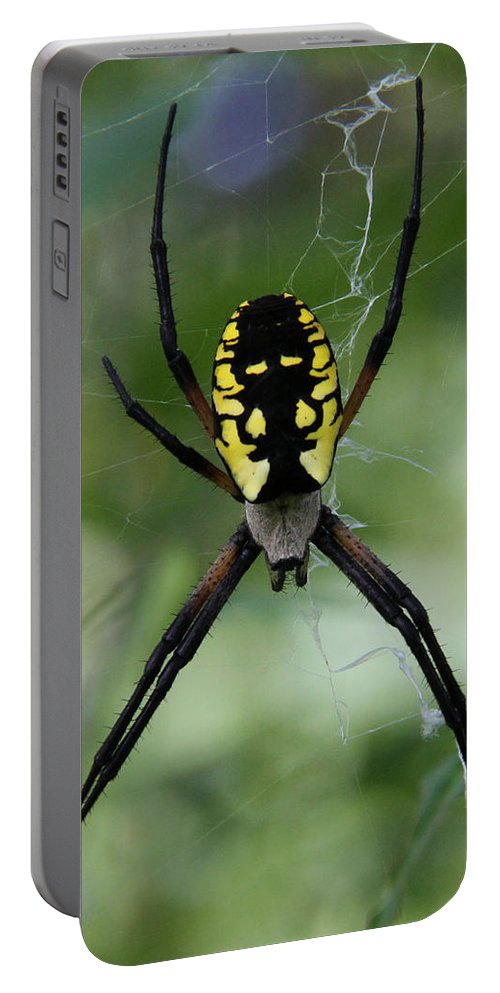 Argiope Aurantia Portable Battery Charger featuring the photograph Argiope by Doris Potter
