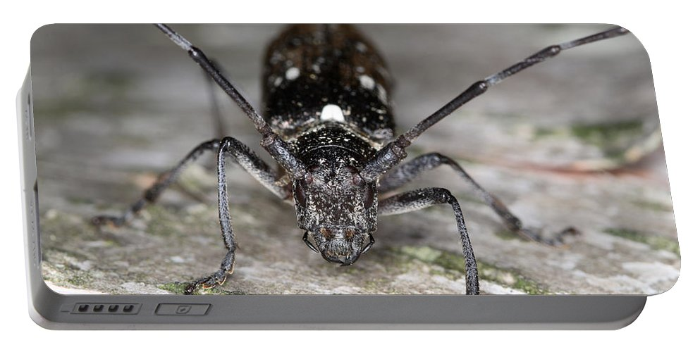 Trees Portable Battery Charger featuring the photograph Asian Long-horned Beetle by Ted Kinsman