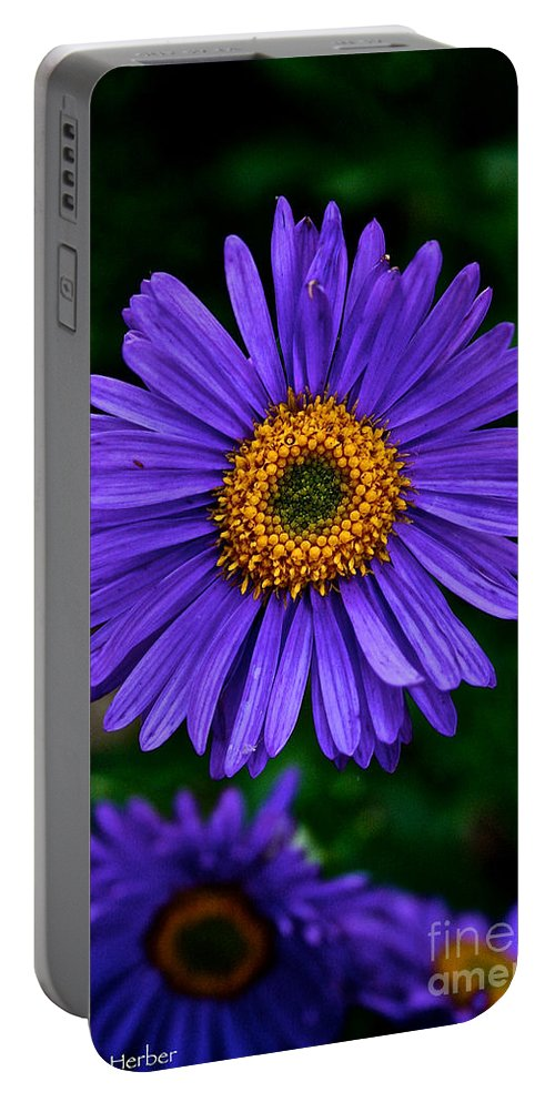 Plant Portable Battery Charger featuring the photograph Aster Trio by Susan Herber