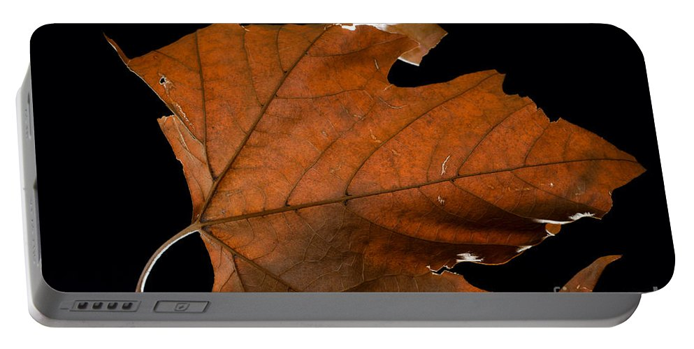 Leaf Portable Battery Charger featuring the photograph Autumn Leaf by Mats Silvan