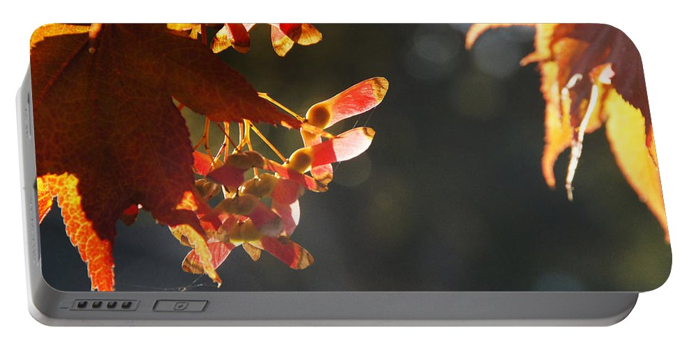 Autumn Portable Battery Charger featuring the photograph Autumn Maple by Mick Anderson