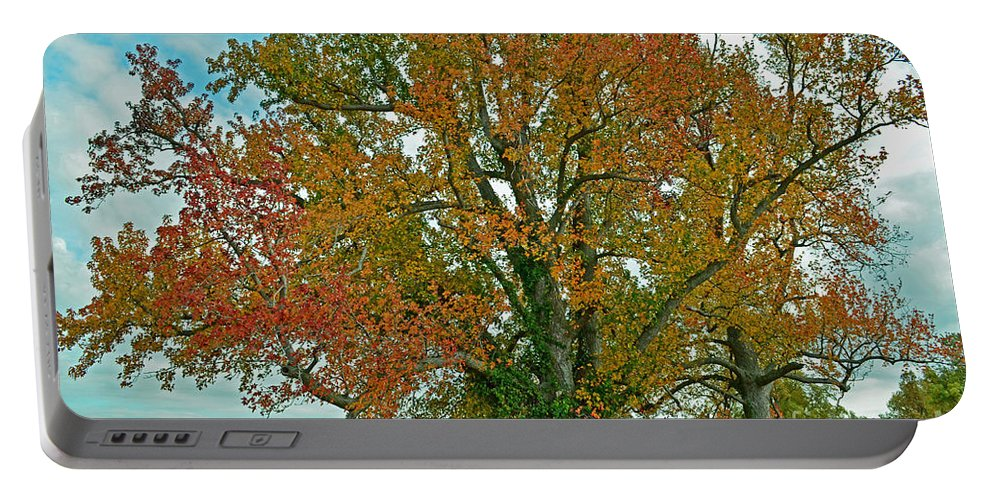 Nature Portable Battery Charger featuring the photograph Autumn Sweetgum Tree by Debbie Portwood