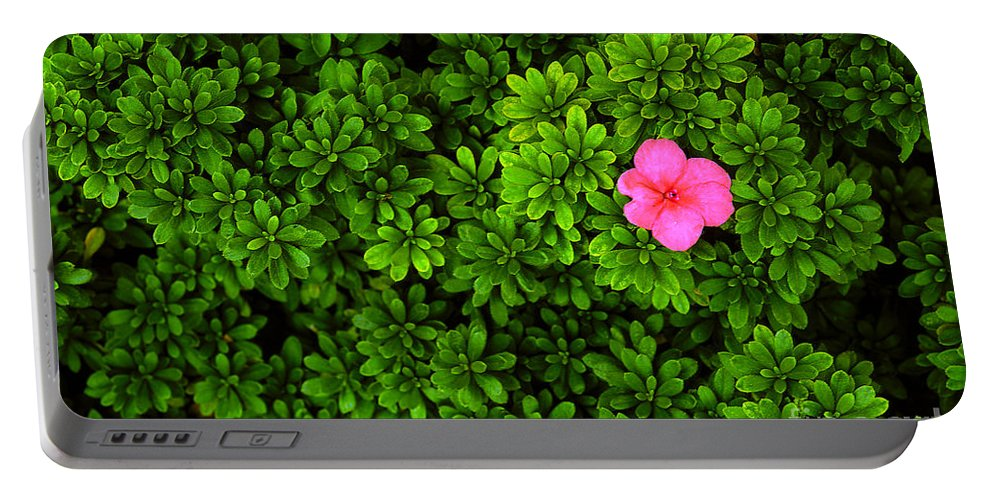 Azalea Portable Battery Charger featuring the photograph Azalea On Boxwoods by Mike Nellums