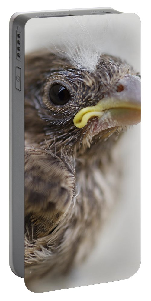Baby Bird Portable Battery Charger featuring the photograph Baby Bird 3 by Jessica Velasco