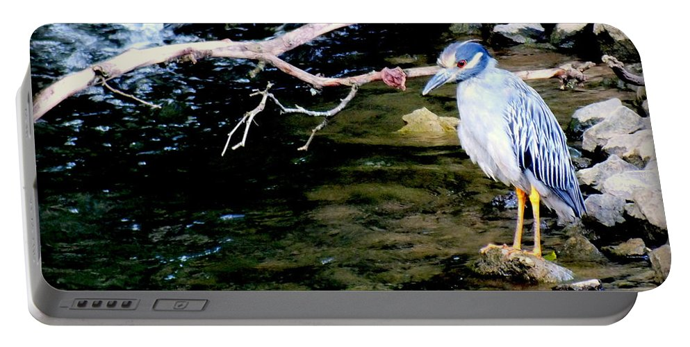 Birds Portable Battery Charger featuring the photograph Baby Blue by Karen Wiles
