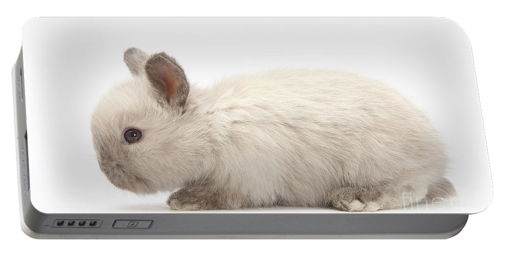 Nature Portable Battery Charger featuring the photograph Baby Colorpoint Rabbit by Mark Taylor