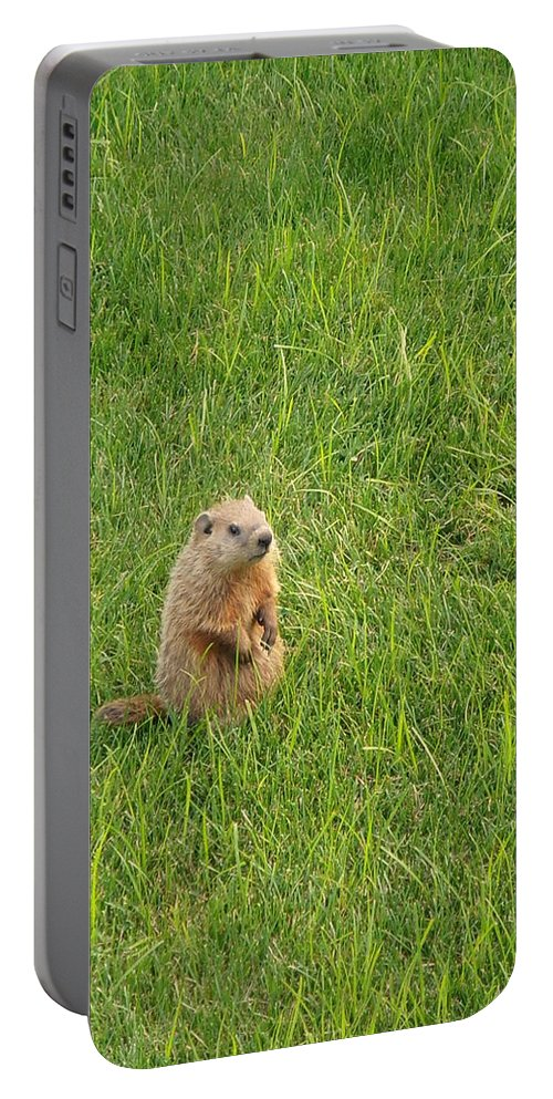 Groundhog Portable Battery Charger featuring the photograph Baby Groundhog by Kimberly Perry