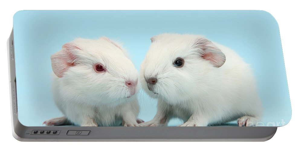 Animal Portable Battery Charger featuring the photograph Baby Guinea Pigs by Mark Taylor