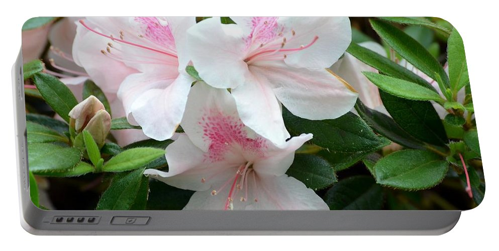 Baby Portable Battery Charger featuring the photograph Baby Pink Azaleas by Maria Urso