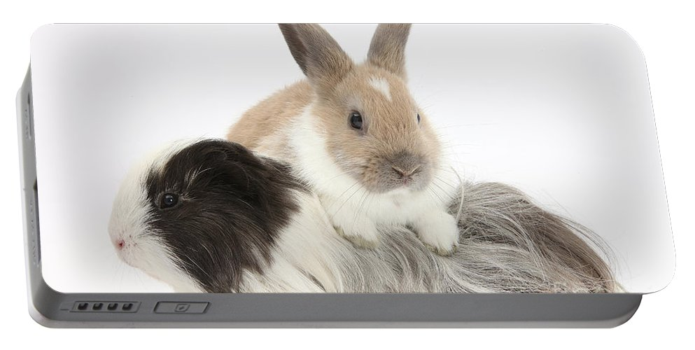 Nature Portable Battery Charger featuring the photograph Baby Rabbit And Long-haired Guinea Pig by Mark Taylor