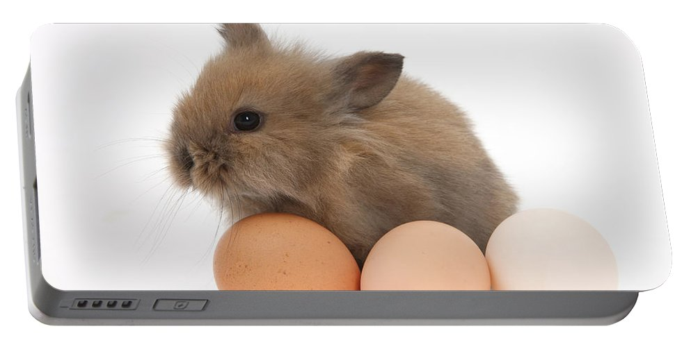 Animal Portable Battery Charger featuring the photograph Baby Rabbit With Eggs by Mark Taylor