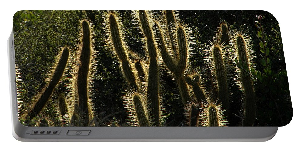 Cactus Portable Battery Charger featuring the photograph Backlit Cactus by Mike Nellums