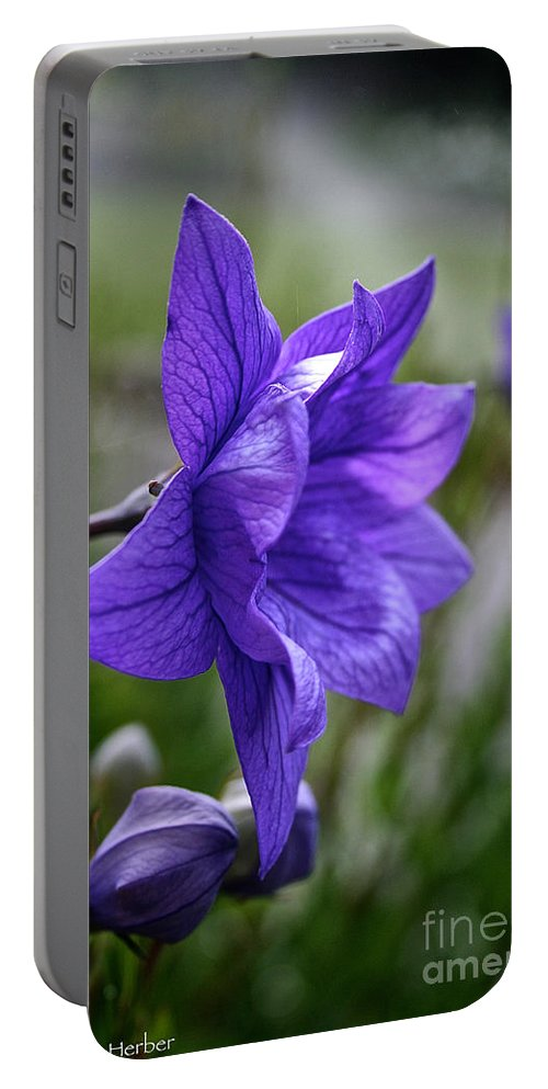 Floral Portable Battery Charger featuring the photograph Balloon Flower Profile by Susan Herber