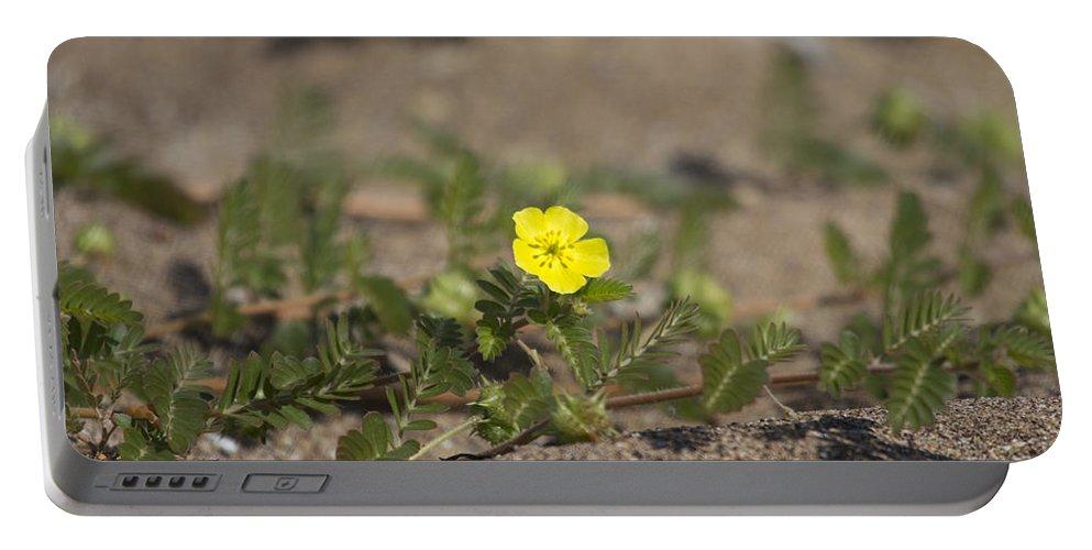 Beach Wildflower Portable Battery Charger featuring the photograph Beach Wildflower by Douglas Barnard