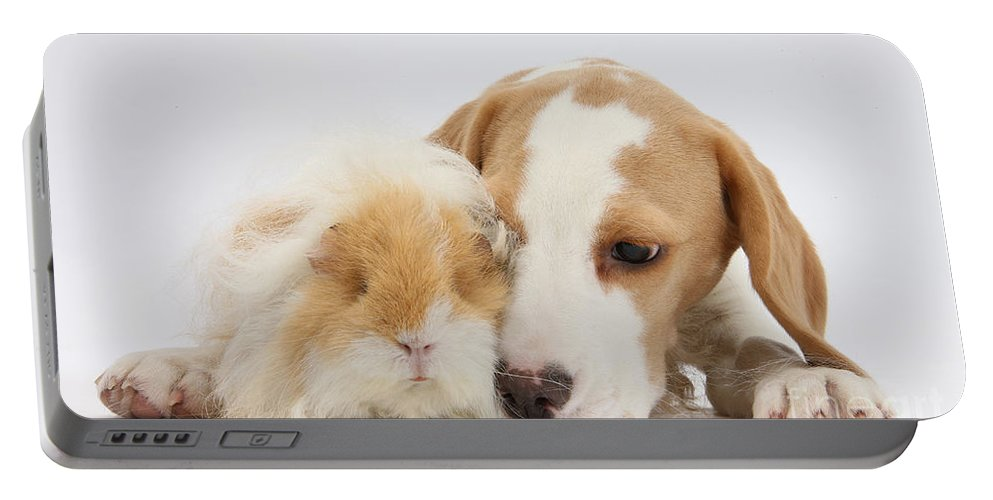 Nature Portable Battery Charger featuring the photograph Beagle Pup And Alpaca Guinea Pig by Mark Taylor