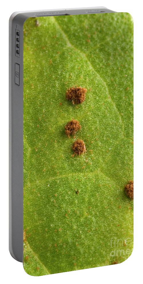 Bean Portable Battery Charger featuring the photograph Bean Leaf With Rust Pustules by Science Source