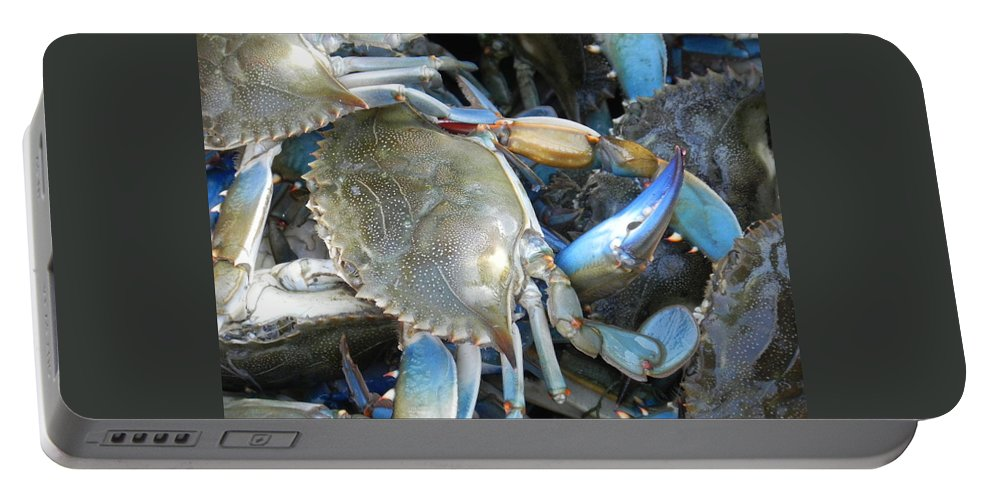 Crabs Portable Battery Charger featuring the photograph Beaufort Blue Crabs by Patricia Greer