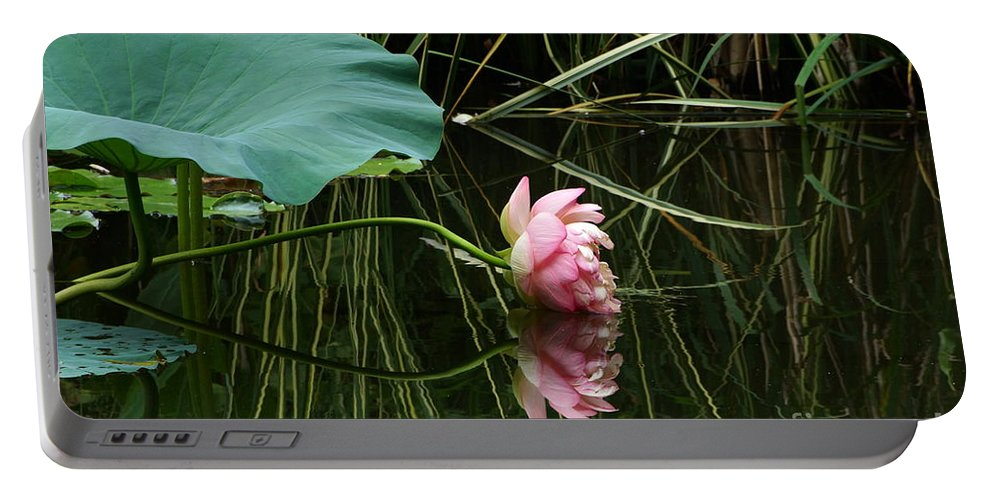 Nelumbo Lutea Nucifera Portable Battery Charger featuring the photograph Beautiful Fallen Lotus by Byron Varvarigos