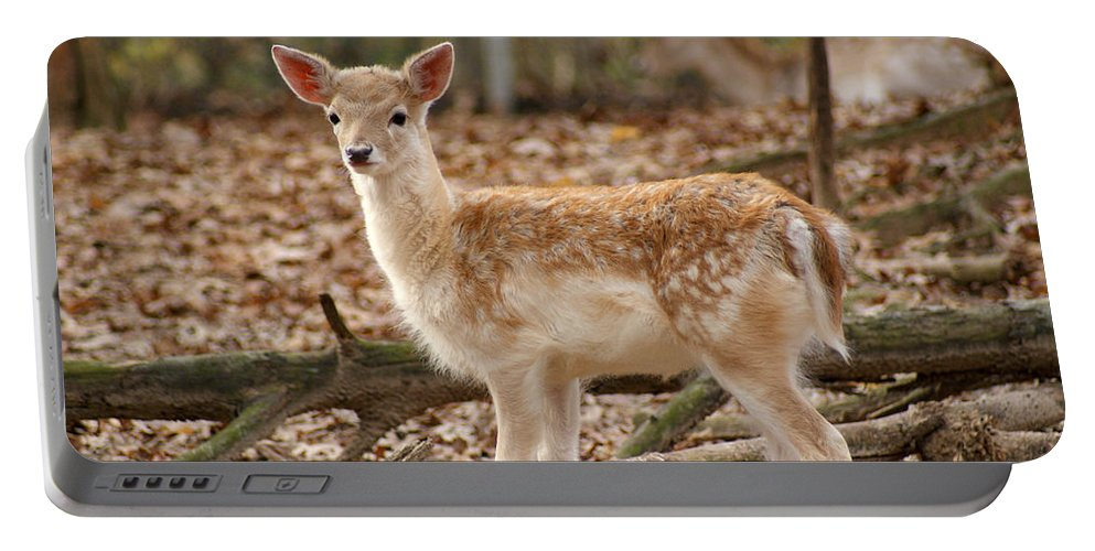 Fawn Portable Battery Charger featuring the photograph Beautiful Fawn by Jean Haynes