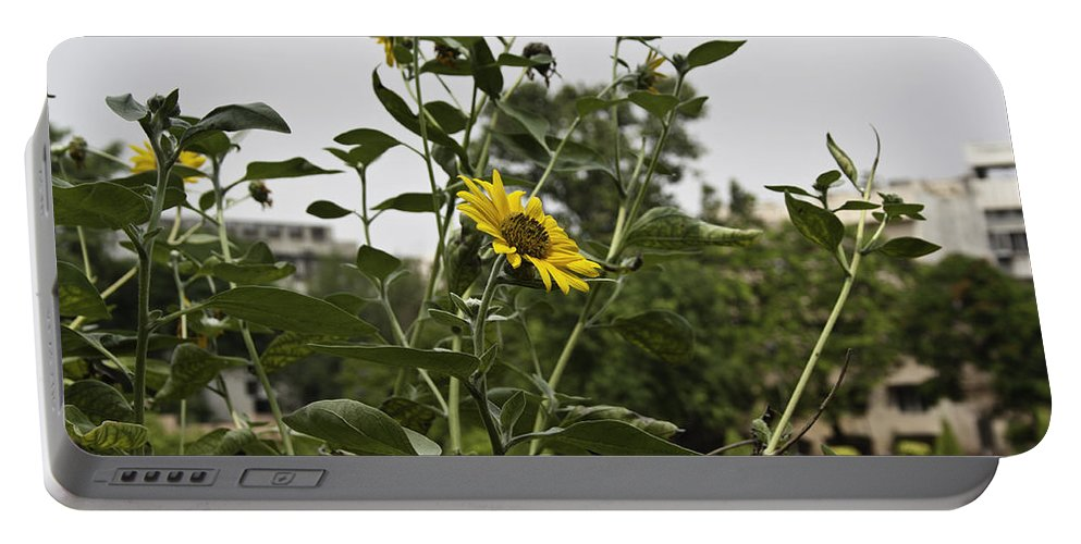 Amritsar Portable Battery Charger featuring the photograph Beautiful Yellow Flower In A Garden by Ashish Agarwal