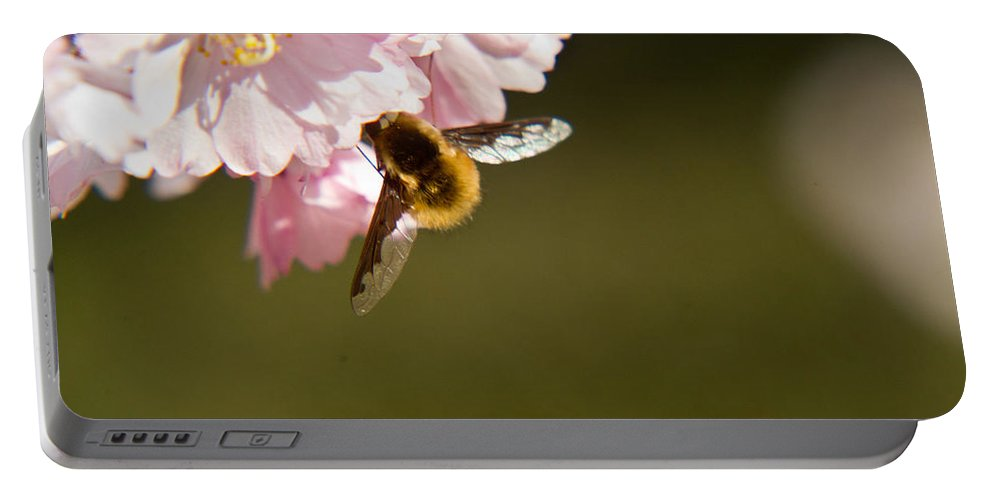Bombyliidae Portable Battery Charger featuring the photograph Bee Fly Feeding 4 by Douglas Barnett