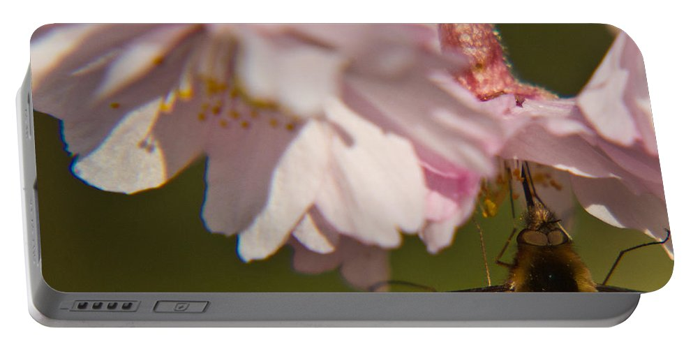 Bombyliidae Portable Battery Charger featuring the photograph Bee Fly Feeding 8 by Douglas Barnett