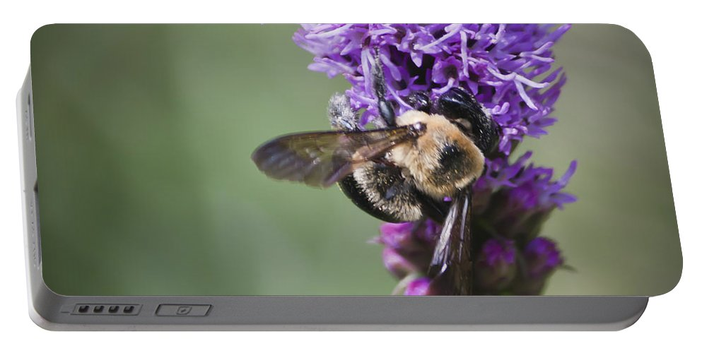 Gayfeather Portable Battery Charger featuring the photograph Bee On Gayfeather Squared 1 by Teresa Mucha