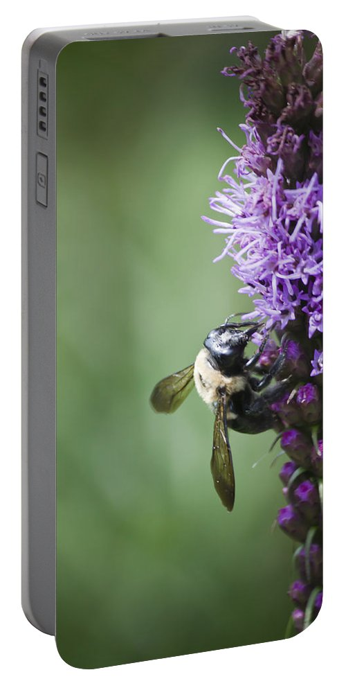 Gayfeather Portable Battery Charger featuring the photograph Bee On Gayfeather by Teresa Mucha