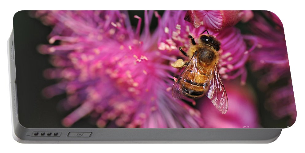 Photography Portable Battery Charger featuring the photograph Bee On Lollypop Blossom by Kaye Menner