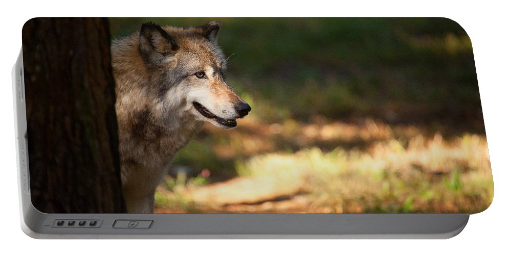 Wolf Portable Battery Charger featuring the photograph Behind The Tree by Karol Livote