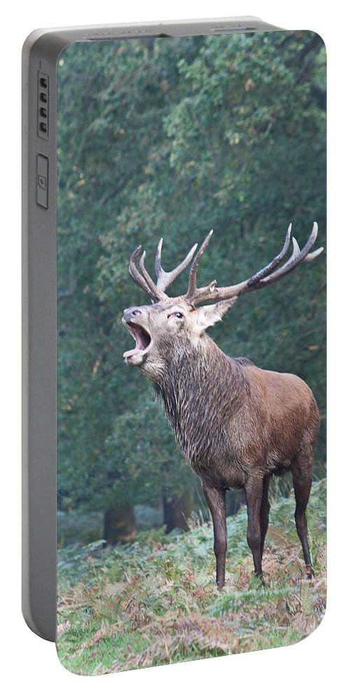 Stag Portable Battery Charger featuring the photograph Bellowing Red Deer Stag by Dawn OConnor
