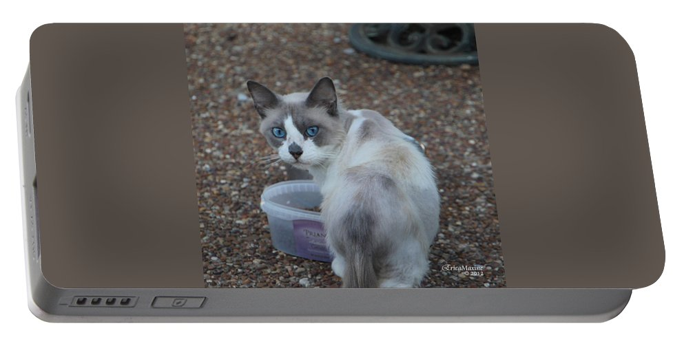 Cat Portable Battery Charger featuring the photograph Betty Davis Eyes by Ericamaxine Price