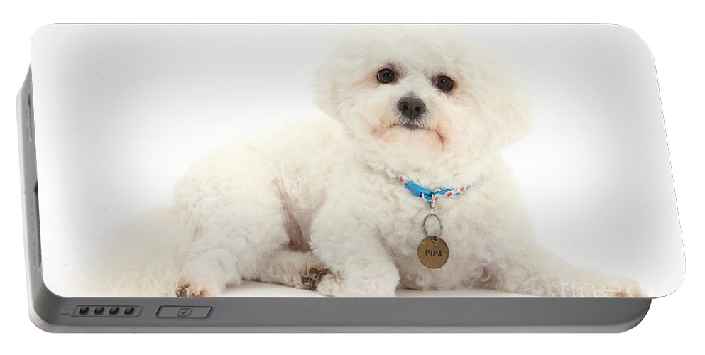 Animal Portable Battery Charger featuring the photograph Bichon Frise by Mark Taylor