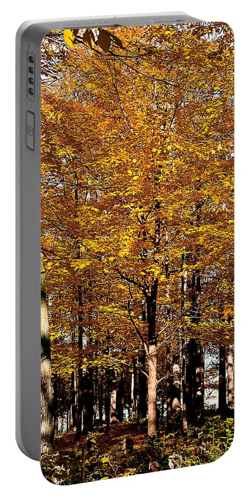 Large Tree With Orange Leaves Portable Battery Charger featuring the photograph Big Orange by Burney Lieberman