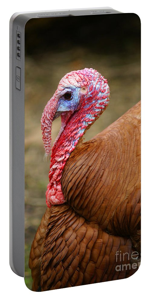 Birds Portable Battery Charger featuring the photograph Big Turkey by Randy Harris