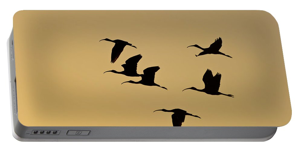 Birds Portable Battery Charger featuring the photograph Birds In Flight by Ed Gleichman