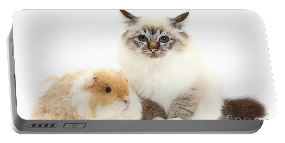 Nature Portable Battery Charger featuring the photograph Birman Cat And Frizzy Guinea Pig by Mark Taylor