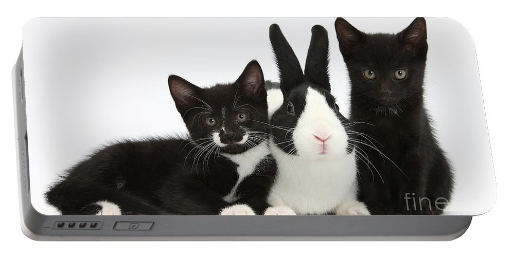 Nature Portable Battery Charger featuring the photograph Black And Tuxedo Kittens With Dutch by Mark Taylor