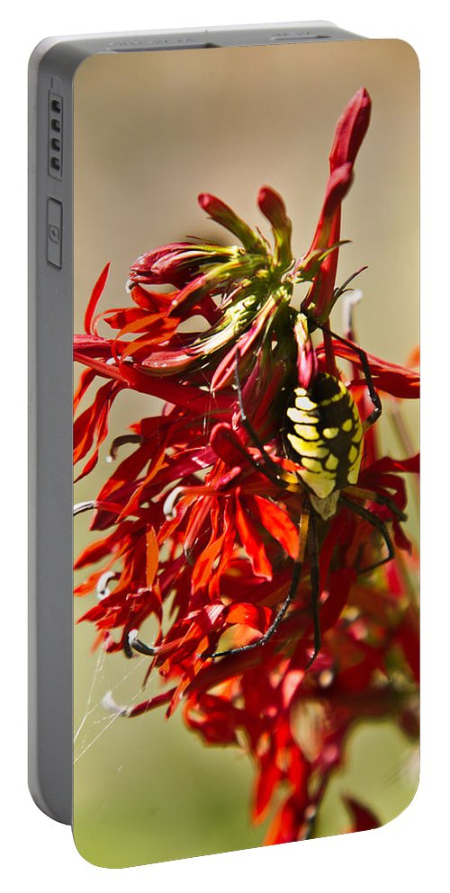 Black Portable Battery Charger featuring the photograph Black And Yellow Garden Spider 1 by Douglas Barnett