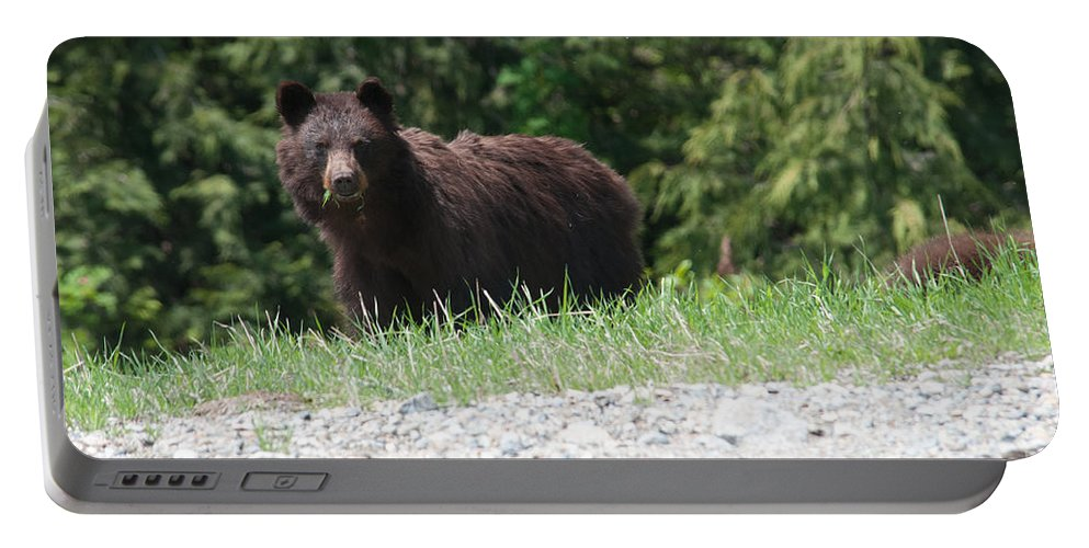 Animals Portable Battery Charger featuring the digital art Black Bear by Carol Ailles