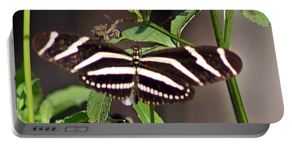 Black Butterfly Portable Battery Charger featuring the photograph Black Butterfly by Joe Faherty