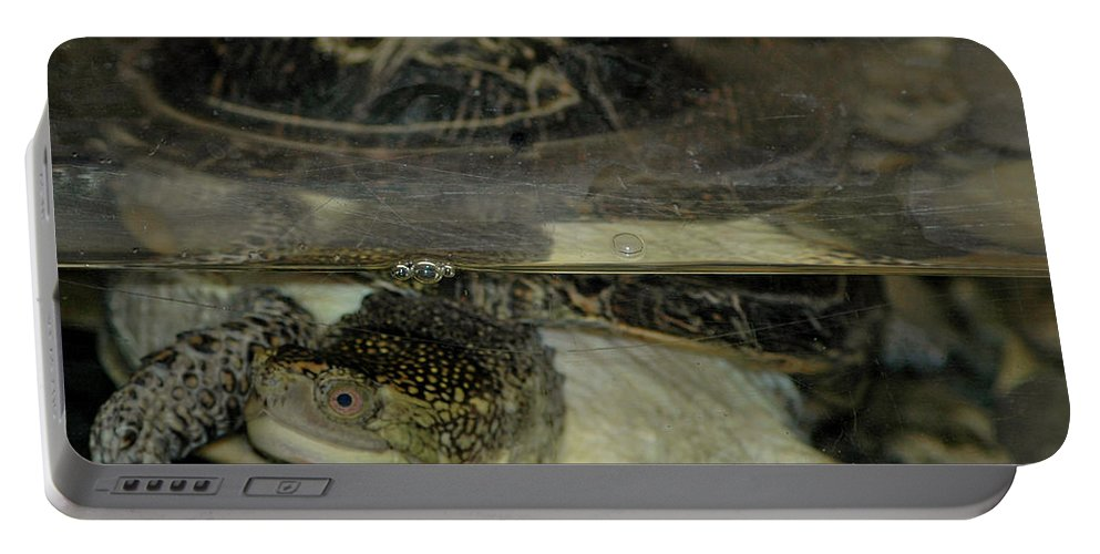 Usa Portable Battery Charger featuring the photograph Blandings Swimming Turtle by LeeAnn McLaneGoetz McLaneGoetzStudioLLCcom