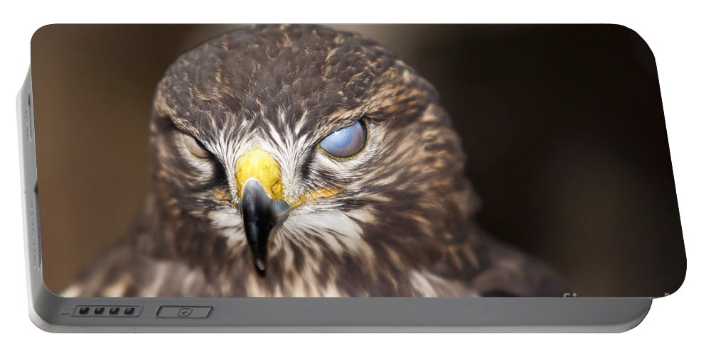 Buzzard Portable Battery Charger featuring the photograph Blind Buzzard by Michal Boubin