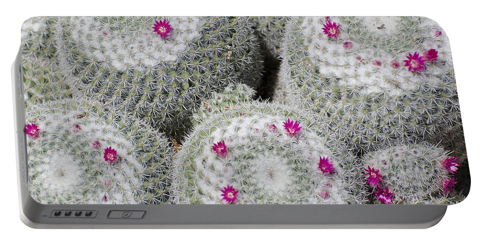 Cactus Portable Battery Charger featuring the photograph Blooming Cactus by Jim And Emily Bush
