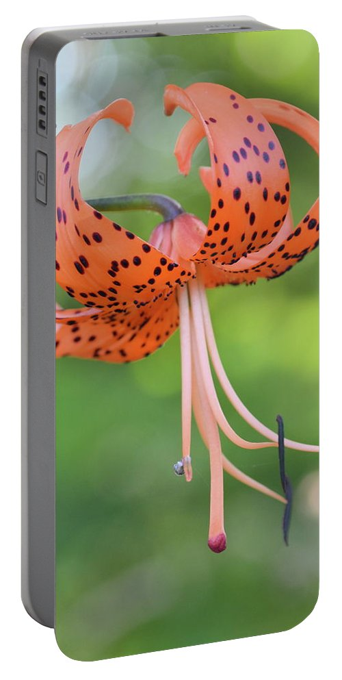 Tiger Portable Battery Charger featuring the photograph Blooming Tiger by JD Grimes